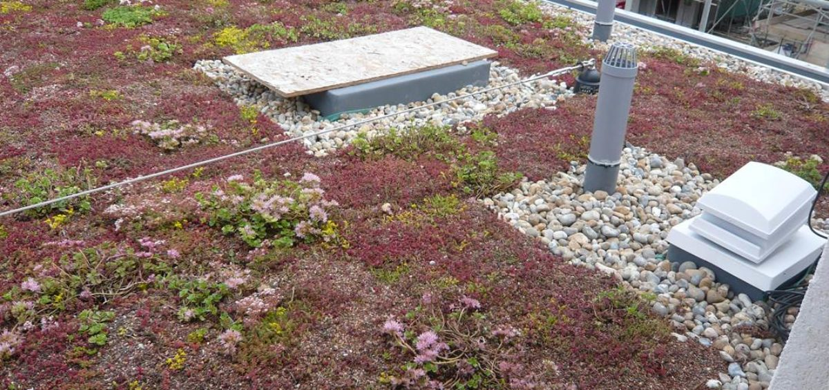Upstands-on-green-roof